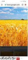 TEREN AGRICOL 5,25 Ha
